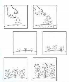 plants sequencing worksheets 13629 steps for growing seeds storia coloring cycles and esl