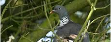 Comment Chasser Les Pigeons De Votre Propri 233 T 233
