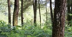 Aset Oksigen Hutan Sebagai Paru Paru Dunia