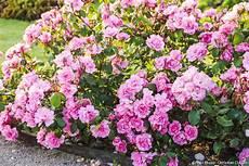 fleur exterieur sans entretien les meilleures plantes pour des bordures sans entretien