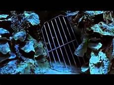 In Der Falle - in der falle h2o pl 246 tzlich meerjungfrau staffel 1