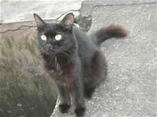 Gambar Kucing Comel Kucing Mata Bulat
