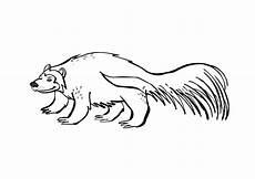 Malvorlagen Zum Ausdrucken Wombat Malvorlage Riesenmarder Ausmalbild 9698