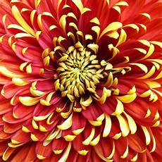 Gambar Ilustrasi Tumbuhan Bunga Hilustrasi