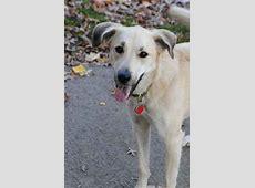 Ruby the Anatolian Shepherd Dog Mix's Photo Gallery