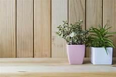 fausse plante salle de bain 10 id 233 es pour transformer sa salle de bain en havre de