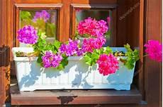 fiori da davanzale fioriere con fiori rosa sul davanzale della finestra