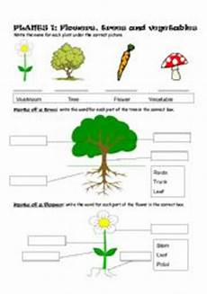 types of plants worksheets for grade 2 13744 plants part 1 flowers trees and vegetables esl worksheet by sophie18