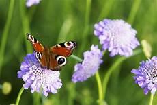 sträucher bienen schmetterlinge insekten im staudengarten gartentechnik de
