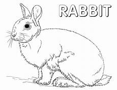 forest animals coloring pages coloring pages to
