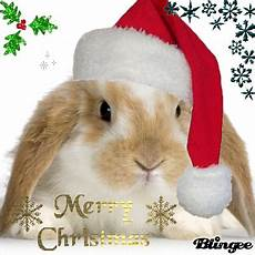christmas bunny picture 76743008 blingee com