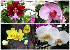 Breaking News Tips Menanam Merawat Bunga Anggrek