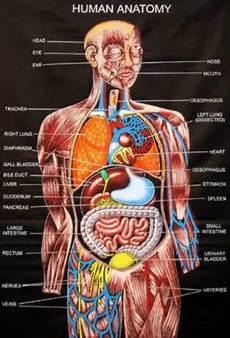 Greendaily Anatomi Tubuh Manusia