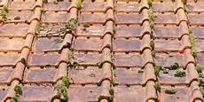 traitement des toitures anti mousse comment faire le diagnostiqueur immobilier