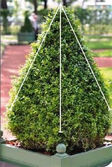 wann buchsbaum schneiden schnittzeiten formschnitte gartenscheren und