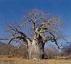 contrario di vanitoso esperienze di cooperazione italia senegal il baobab