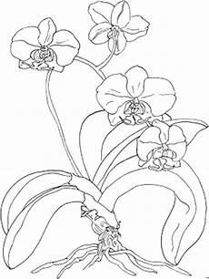 Window Color Malvorlagen Orchideen Orchidee Viele Blumen Malvorlagen Blumen
