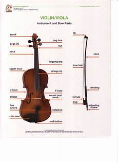 Beginners Parts Of The String Instrument Ms Macleod S