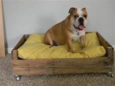 Hundebett Selber Machen - 10 diy pallet bed designs newnist
