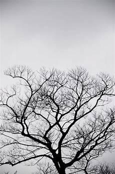 Gambar Pohon Cabang Bayangan Hitam Musim Dingin