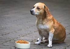 Welches Hundefutter Ist Das Beste - hundefutter kaufen welches ist das beste