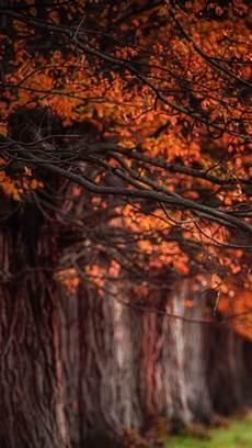 Iphone Cozy Autumn Wallpapers