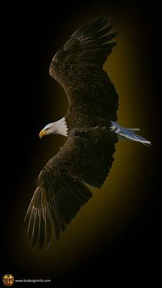 iphone black eagle wallpaper hd eagle mobile wallpaper gallery
