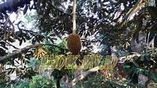 Terkeren 25 Gambar Durian Kartun Lucu