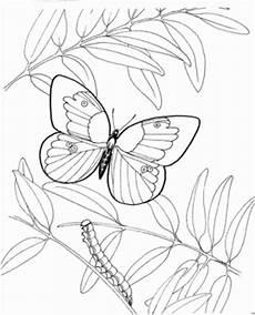 Ausmalbild Schmetterling Und Raupe Schmetterling Mit Raupe Ausmalbild Malvorlage Tiere
