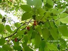 Le Monde De Kitchi Mein Freund Der Baum Exoten Aus Asien
