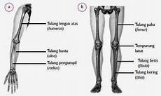 Pengobatan Patah Tulang