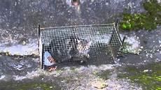 chat trapp 233 pour st 233 rilisation
