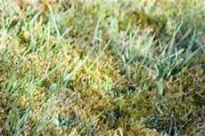 Wann Rasen Kalken 187 So Finden Sie Den Richtigen Zeitpunkt