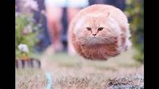 Cat Pictures Taken At The Right Time