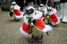 Vogel Malvorlagen Jepang Sambut Natal Kebun Binatang Jepang Hadirkan Penguin Santa