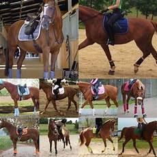 welche farben passen du pferden die als farbe fuchs sind