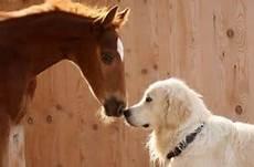 Malvorlage Pferd Und Hund Pferd Und Hund Im Reitstall Wer Haftet Bei Unf 228 Llen Und