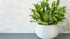 Zimmerpflanzen Für Gute Luft - zimmerpflanzen sind gut f 252 r das raumklima bei freizeit