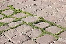 moos steinen entfernen genug moos auf steinen entfernen xl67 casaramonaacademy