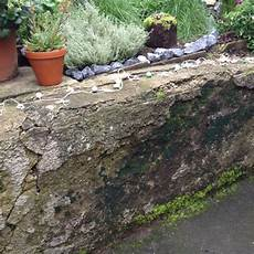 Wie Kann Ich Unsere Alte Feuchte Gartenmauer Aufh 252 Bschen
