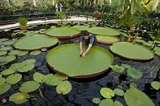Pflanzen Am Teich Teich Bepflanzen Mehr Als 70 Ideen Gartengestaltung Ideen Garden Water Lilies Outdoor Decor