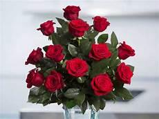 terkeren 18 gambar bunga mawar cantik dan indah richa
