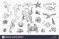 Malvorlagen Unterwasser Tiere Vorlage Meeresbewohner Isoliert Auf Wei 223 Em Hintergrund