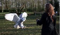 Jual Burung Hantu Christoper
