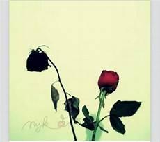 Gambar Dp Bbm Bunga Kumpulan Gambar Dp Bbm