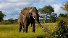 Gambar Gajah Lengkap Gambar Foto