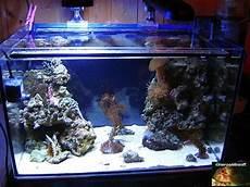 unser erstes meerwasserbecken aquarium forum