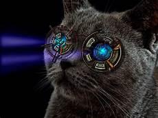 Die Sniper Brille F 252 R Die Kurzsichtige Katze Foto Bild