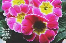 frasi con fiori fiori frasi una primula non fa primavera was