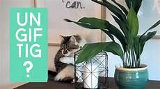 6 ungiftige pflanzen f 252 r katzen